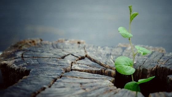 Future Proof Leadership - plant in stump